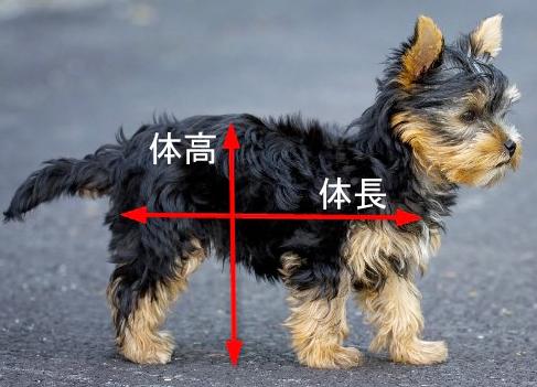 犬のサイズ
